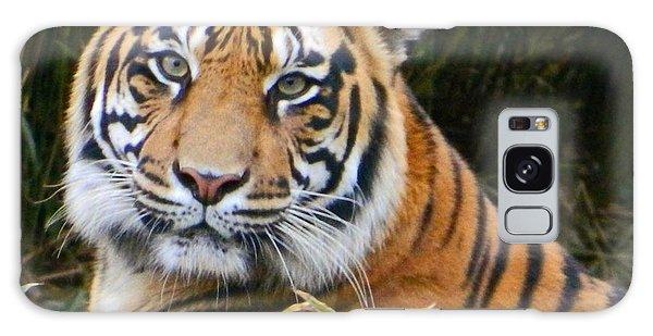 The Eyes Of A Sumatran Tiger Galaxy Case