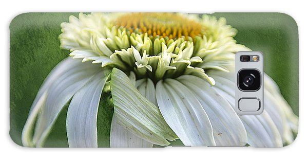 The First Coneflower Galaxy Case