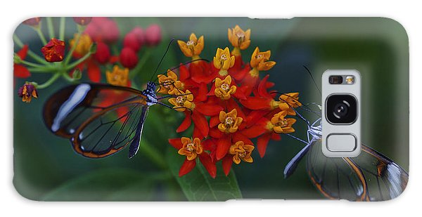 The Glasswinged Butterfly Galaxy Case