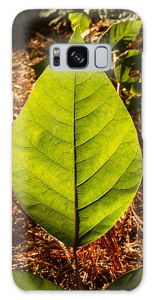 Crossville Galaxy Case - The Glow Of Leaf Venation  by Douglas Barnett