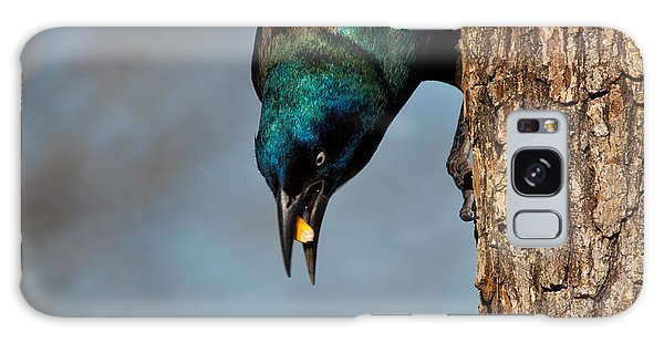 The Grackle Galaxy Case by Mark Alder