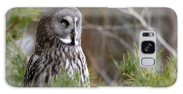 The Great Grey Owl Galaxy Case