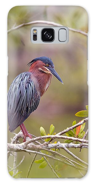 The Green Heron At Blue Hole Galaxy Case