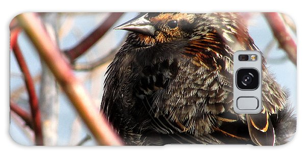 The Lady Blackbird Galaxy Case