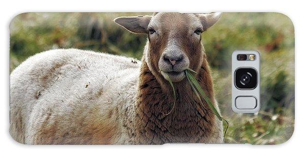 Feed My Sheep Galaxy Case