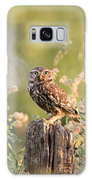 Owl Galaxy S8 Case - The Little Owl by Roeselien Raimond