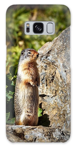 The Marmot Galaxy Case