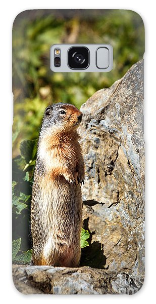 Groundhog Galaxy Case - The Marmot by Robert Bales