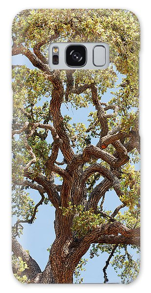 The Old Tree Galaxy Case