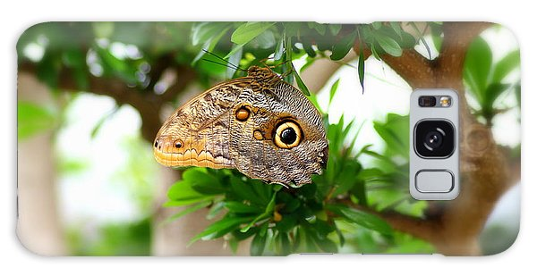 Brookside Gardens Galaxy Case - The Owl Butterfly by Patti Whitten