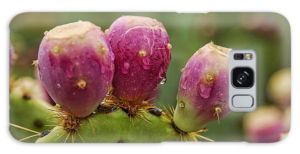 The Prickly Pear  Galaxy Case