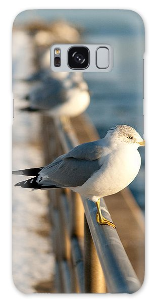 The Ring-billed Gull Galaxy Case