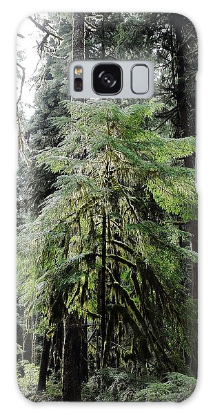 The Tree In The Forest Galaxy Case