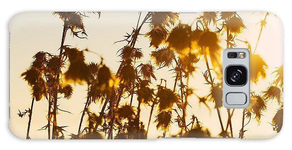 Thistles In The Sunset Galaxy Case by Chevy Fleet