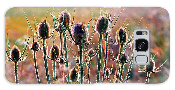 Thistles With Sunset Light Galaxy Case