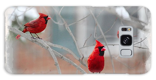 Galaxy Case featuring the photograph Three Cardinals In A Tree by Dan Friend