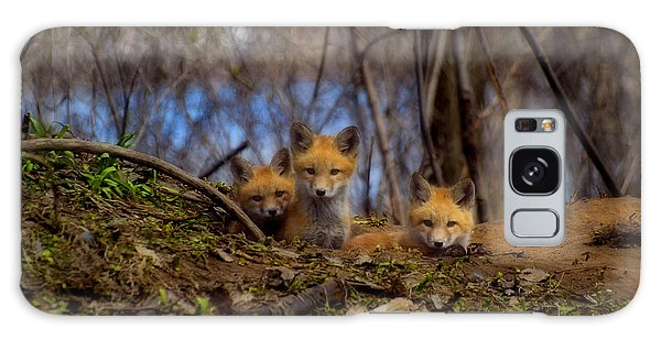 Three Cute Kit Foxes At Attention Galaxy Case