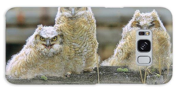 Three Great-horned Owl Chicks Galaxy Case