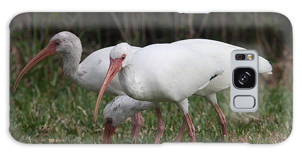 Three Ibis Together Galaxy Case by Christiane Schulze Art And Photography