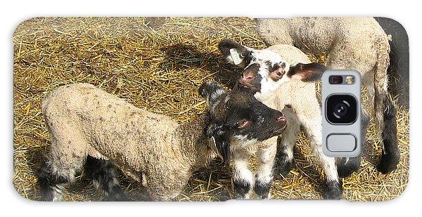 Three Little Lambs In Spring Sunshine Galaxy Case
