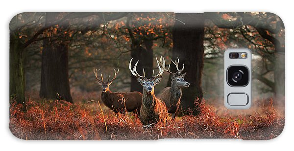 Three Red Deer, Cervus Elaphus Galaxy Case