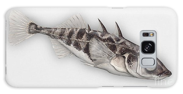 Three-spined Stickleback Gasterosteus Aculeatus - Stichling - L'epinoche - Espinoso - Kolmipiikki Galaxy Case