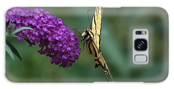 Tiger Swallowtail Butterfly Galaxy Case by Michael Dohnalek