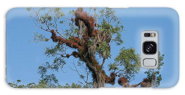 Tikal Furry Tree Galaxy Case