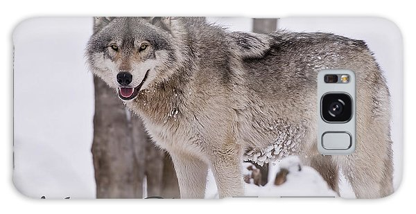 Timber Wolf Christmas Card English 3 Galaxy Case