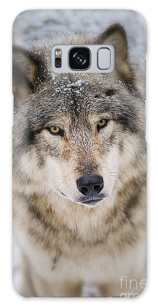 Timber Wolf Pictures 254 Galaxy Case