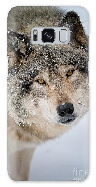 Timber Wolf Pictures 255 Galaxy Case by Wolves Only