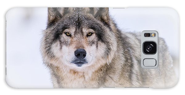 Timber Wolf Pictures 256 Galaxy Case