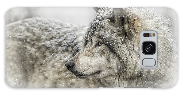 Timber Wolf Pictures 280 Galaxy Case