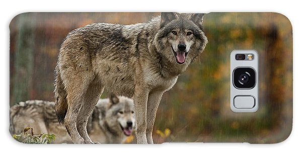 Timber Wolf Pictures 410 Galaxy Case