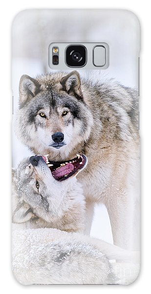 Timber Wolf Pictures 56 Galaxy Case by Wolves Only