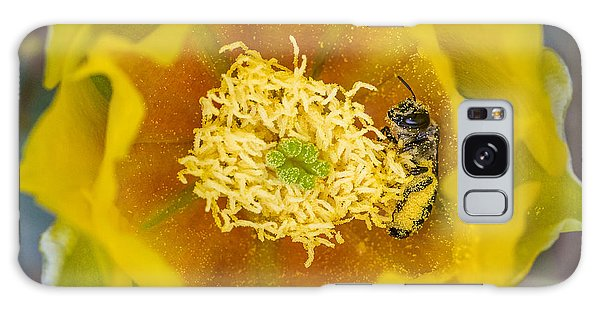 Tiny Dark Bee Covered In Prickly Pear Pollen Galaxy Case