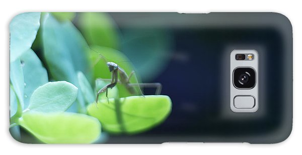 Tiny Praying Mantis On Sedum Galaxy Case by Rebecca Sherman