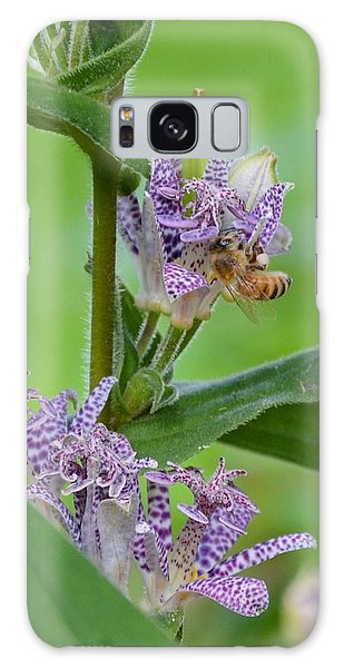 Toad Lily And Hover Fly Galaxy Case