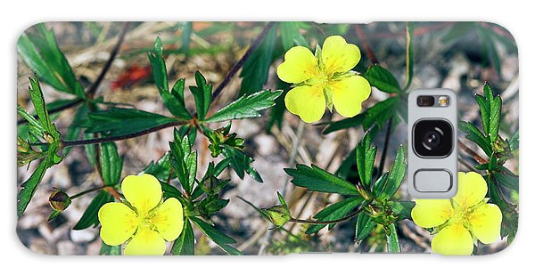 Cairngorms National Park Galaxy Case - Tormentil (potentilla Erecta) by Duncan Shaw/science Photo Library