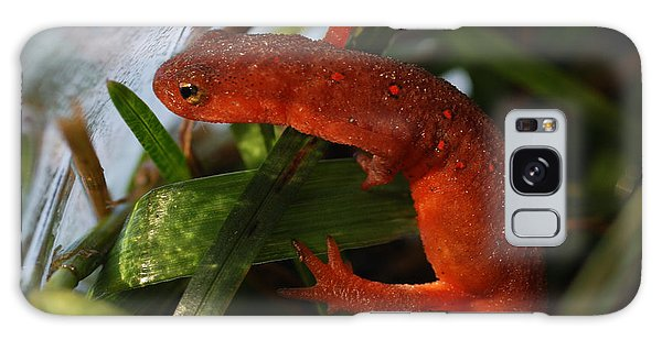 Newts Galaxy Case - Travels Of A Newt by Susan Capuano