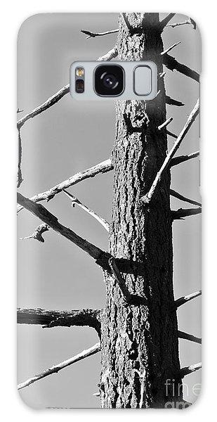Tree Ancestor Galaxy Case
