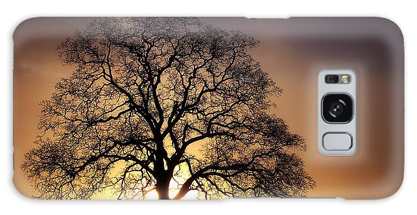 Tree At Sunrise In The Fog Galaxy Case