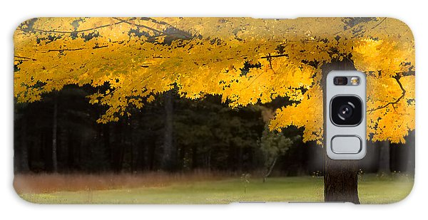 Tree Canopy Glowing In The Morning Sun Galaxy Case by Jeff Folger