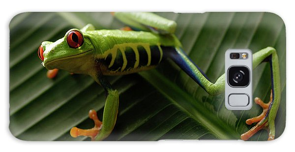 Tree Frog 16 Galaxy Case