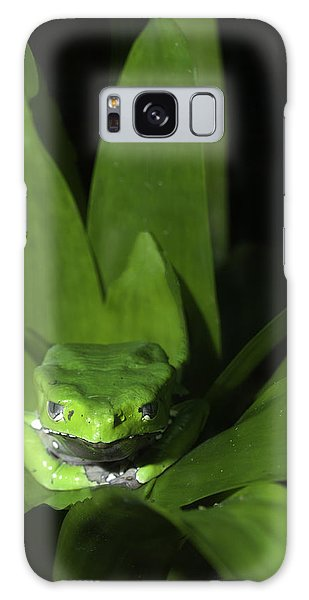 Tree Frog In The Zoo Galaxy Case