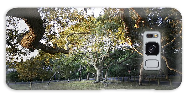 Tree In St. Augustine Park Galaxy Case
