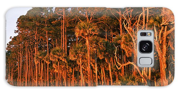 Hunting Island Galaxy Case - Trees, Hunting Island State Park by Panoramic Images