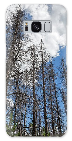White Mountain National Forest Galaxy Case - Trees Killed By Pine Beetle Outbreak by Jim West