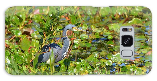 Tri Colored Heron 2 Galaxy Case