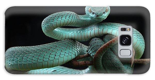 Viper Galaxy Case - Trimeresurus Insularis [blue] by Wel Nofri